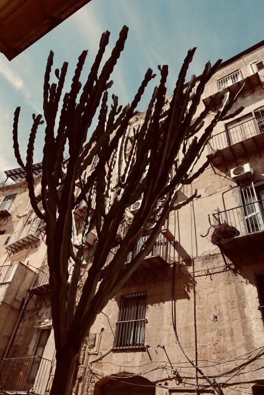 Straat met cactus, Agrigento, Sicilië
