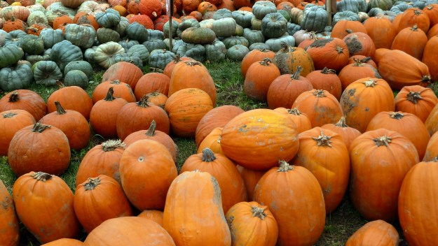 pumpkin, farm, halloween, howell family farm, fonthill, hallowe'en,