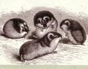 Les Lemmings - Tété