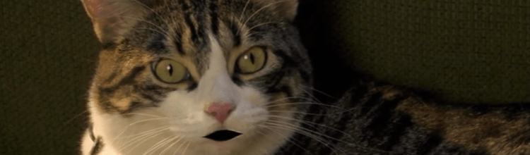 Episode 9: A Halloween Puppy (2012) & A Talking Cat!?! (2013) (/w Peter Kuplowsky)