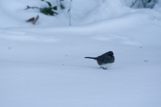 Black/White Bird Lonely
