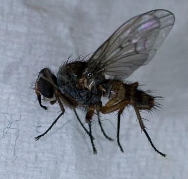 Basement Fly