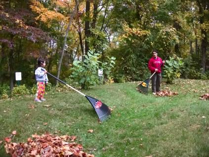 raking - 2015-10-24--006