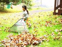 raking - 2015-10-24--007