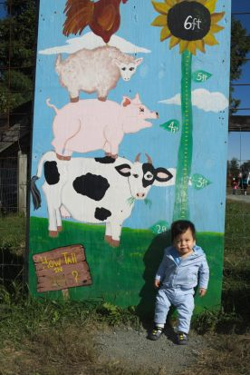 Annual Farm Height Measurement: Samuel
