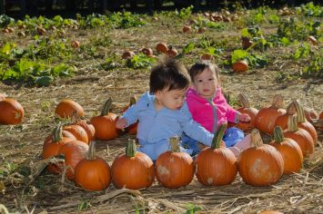 Twins at the Pumpkin Patch