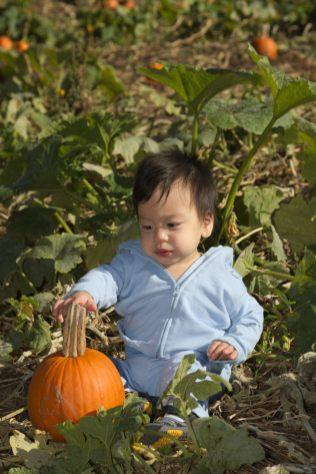 """Pumpkins for Me!"""