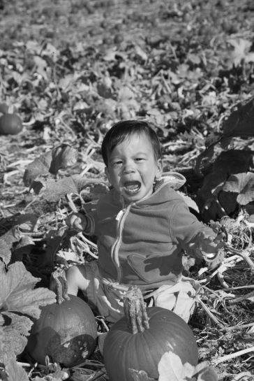 """""""No more pumpkins!"""""""