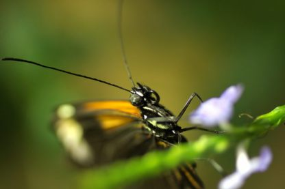 butterfly at Smithsonian - 2017-04-22T10:35:09 - 147