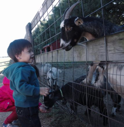 Sam and Scarlett feeding goats