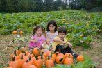 Pumpkin Patch Portraits- 2018-10-07T09:03:08 - 035
