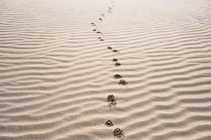 Footprints are like backlinks because they lead back to you.