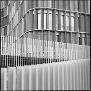 Hasselblad Kodak TriX Caffenol