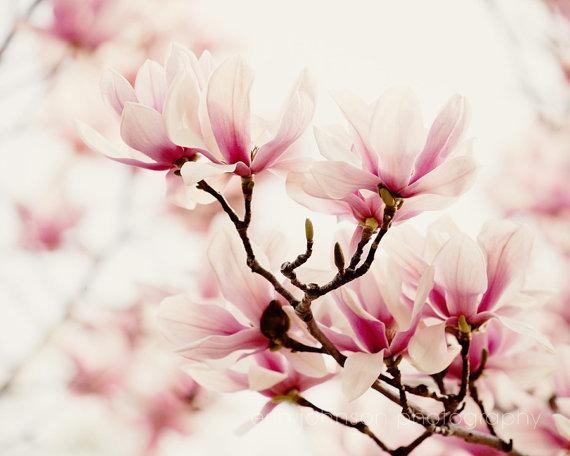 Erin Johnson Photography Under The Tulip Tree