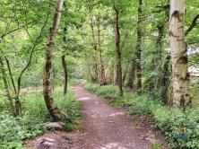 Wanderweg an der Alsterquelle Naturschutzgebiet Oberalsterniederung