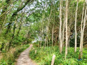 Gespensterwald im Geltinger Birk
