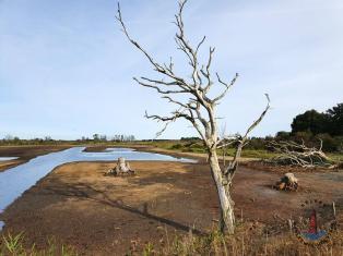 Landschaft im Geltinger Birk