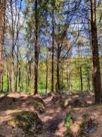 Wanderweg Mönkloh Waldlehrpfad Hasselbusch