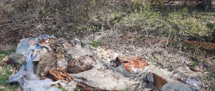 SAUREI! Illegale Müllentsorgung direkt am Waldrand