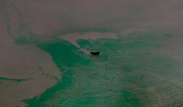 2015 Greenpeace, photo Aaron Sprecher, Encana fracking blowout Karnes Co Texas.1523