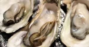 Wiener Auster: Sexstellung für Gelenkige | Pornolexikon Erotiklexikon