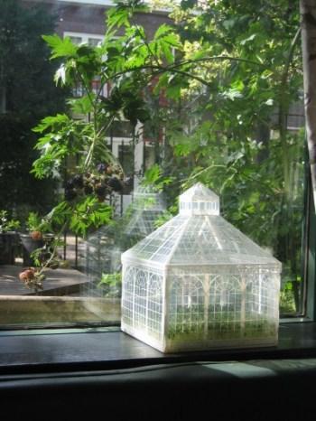 mini greenhouse - mini serre - talee, piante e semine indoor - R nel bosco - citrus 2