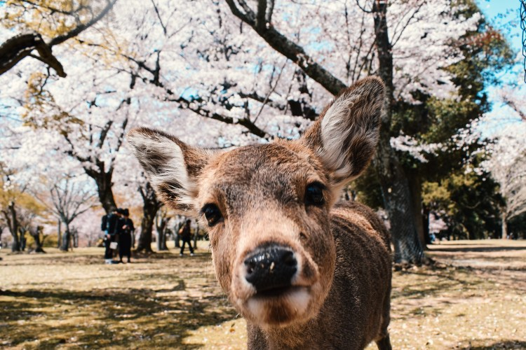 Excursies in Nara