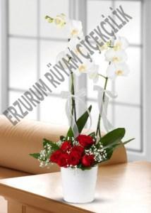 orkide saksı çiçeği güller sevgili