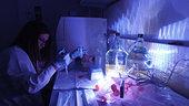 PlanOx_student_preparing_samples_for_fluorescence_microscopy_small.jpg