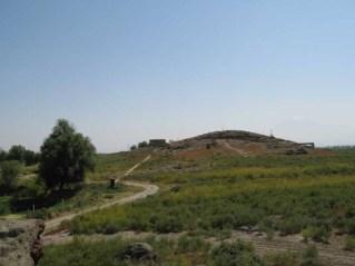Metsamor1