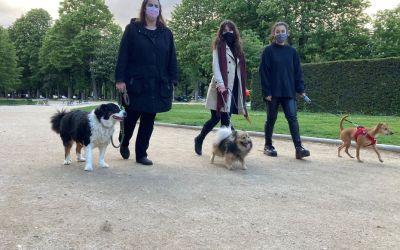 Les Promeneuses du couvre-feu : un groupe pour éviter aux femmes de sortir seules leur chien !