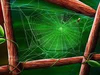 Série esboços e ilustrações: A teia de aranha de Deus!