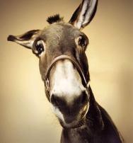 ilustrações, burro, burro de carga