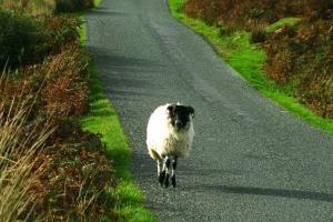 Explicando as parábolas de Jesus: A ovelha perdida