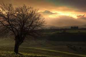 Por que Jesus amaldiçoou a figueira sem frutos? A árvore tinha culpa?