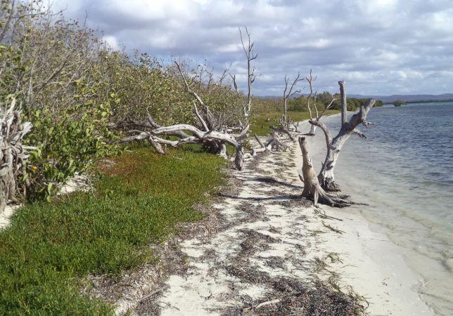 A pesar de que actualmente los estudios en la península muestran síntomas de estabilidad, las medidas de protección resultan insuficientes.