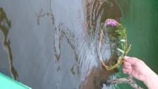 Oeuvre ephemere en canoe 44