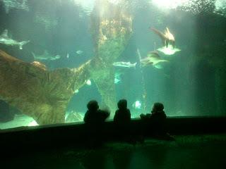 Un clásico: el zoo de Madrid con niños pequeños