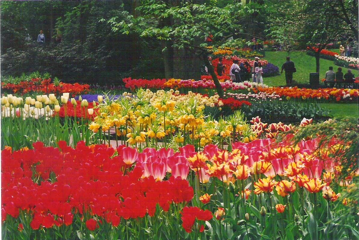 Viaje al mundo de las flores: Keukenhof (Holanda), con niños