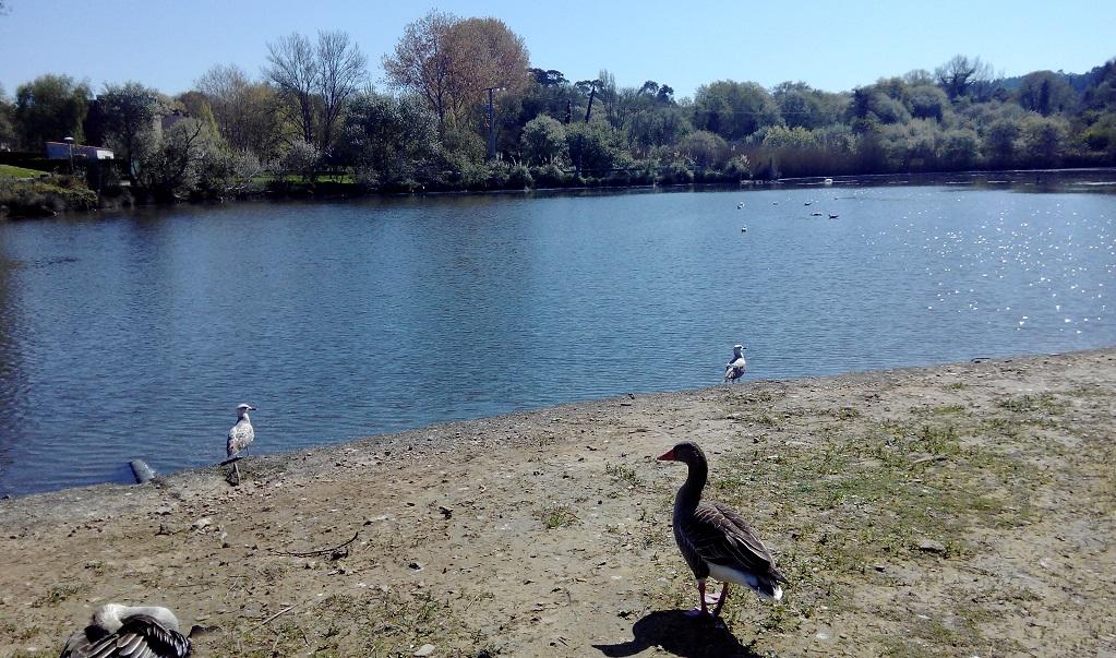 La laguna de Mera (Oleiros) y su parque, con niños