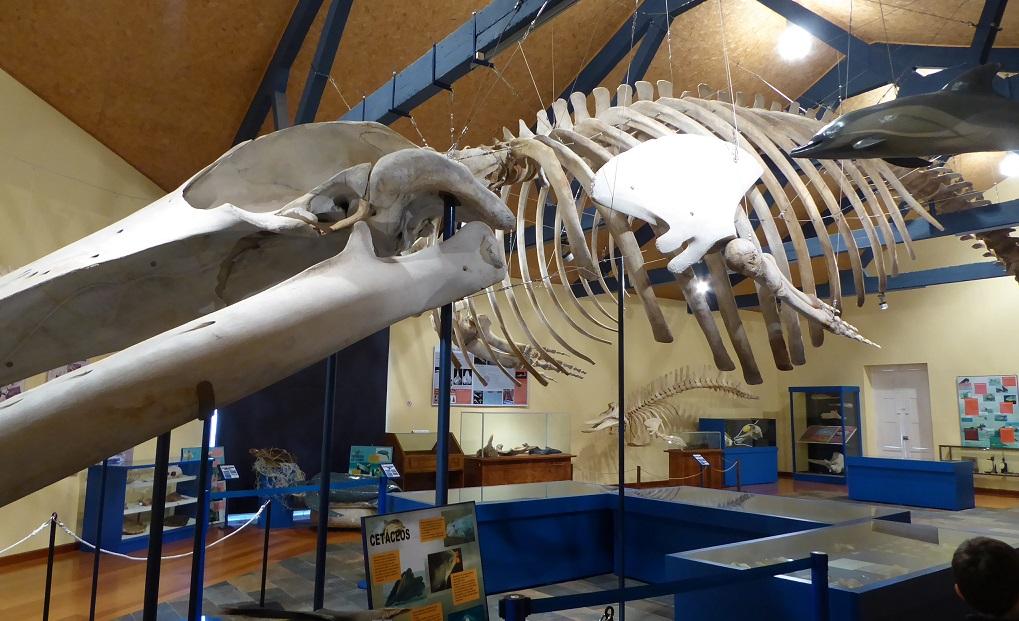 El Museo de Historia Natural de Ferrol, con niños