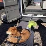 Dog Day Bed Outside Campervan