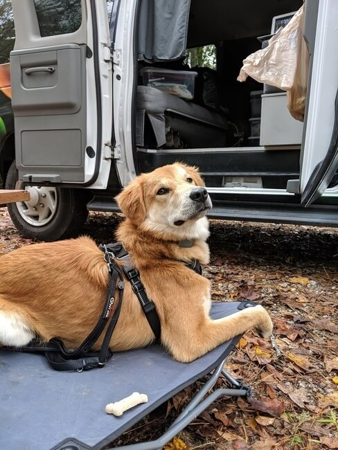 Dog Day Bed Camping in Mississippi