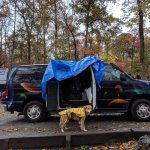 campervan and dog in rain