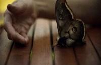 Sebastien Tabuteaud, moth