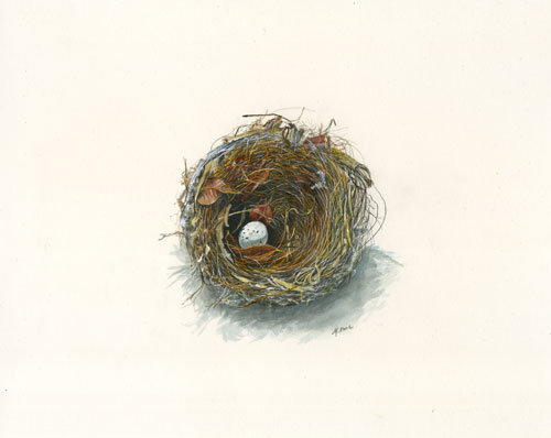 Maryjo Koch, American Goldfinch Nest