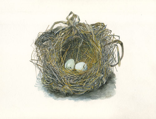 Maryjo Koch, Red-Winged Blackbird Nest with Eggs