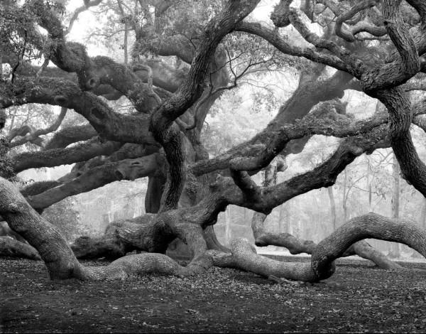 William Lemke, Angel Oak