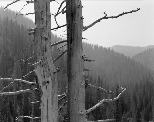 William Lemke, Dead Trees Idaho