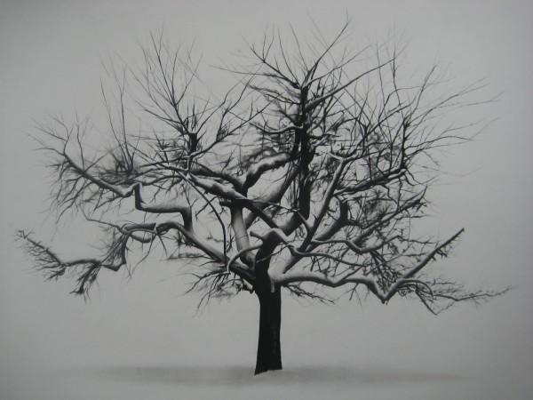 Samuel Jan, Tree in Winter